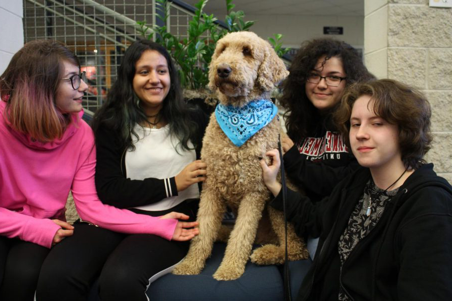In+the+VHHS+main+entrance+lob通过%2C+therapy+dog+Basil+can+be+seen+helping+relieve+students%E2%80%99+stress+throughout+the+semester.+Basil+can+provide+a+sense+of+comfort%2C+especially+during+stressful+periods+for+students.+